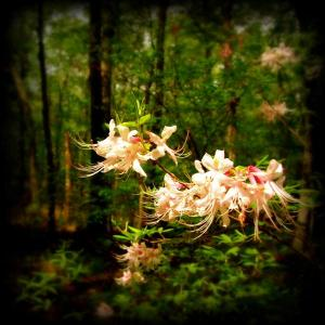 forest flowers (Medium)