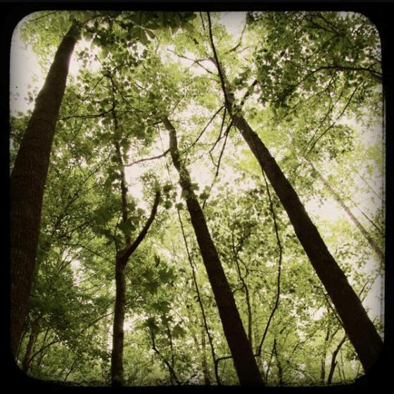 treetops (Medium)